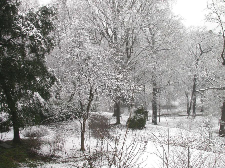 Inverno nel Boschetto dell'Orto Botanico di Torino (foto V. Fossa)