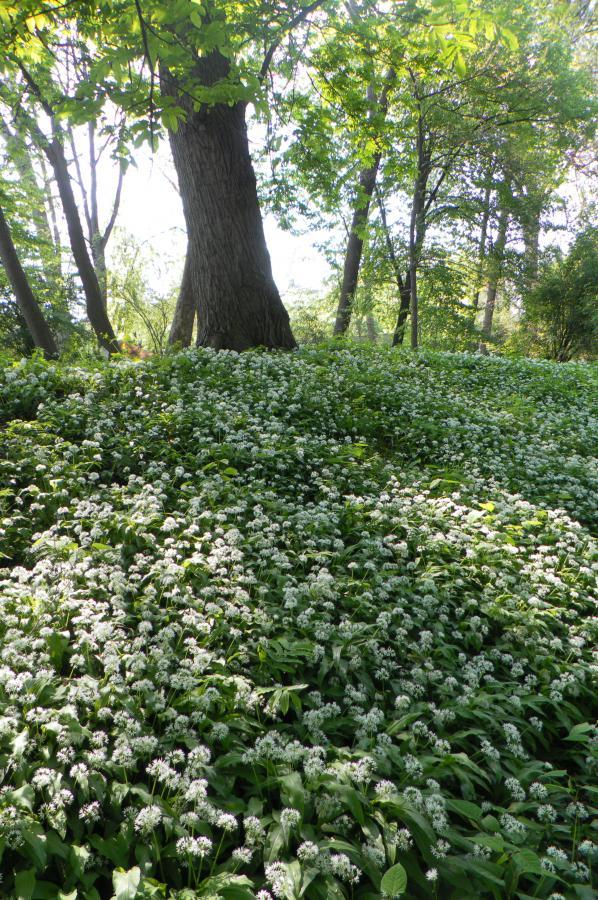 Primavera nel Boschetto dell'Orto Botanico di Torino (foto M. Poggi)