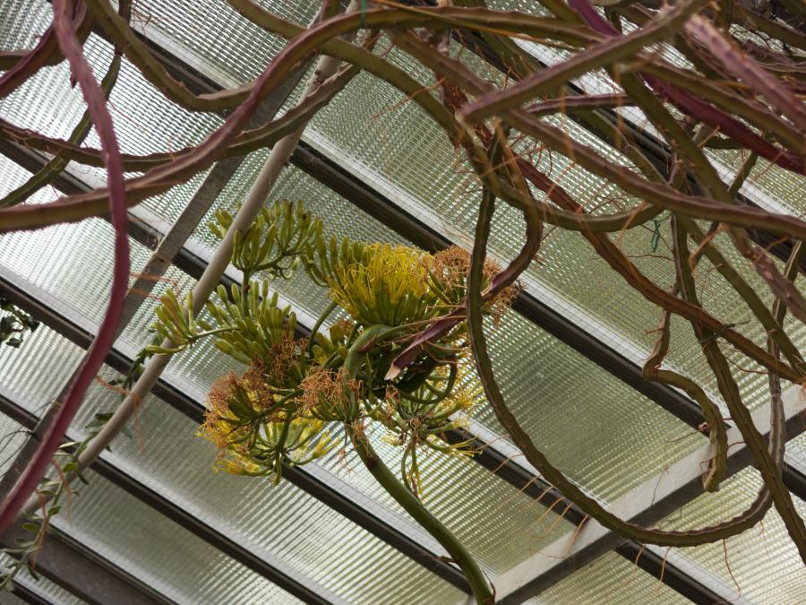 Le fioriture - Serra tropicale dell'Orto Botanico di Torino (foto A. Lomagno)