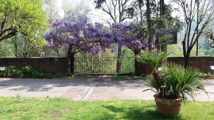 Le aiuole del Giardino, Orto Botanico di Torino (foto C. Ristorto)