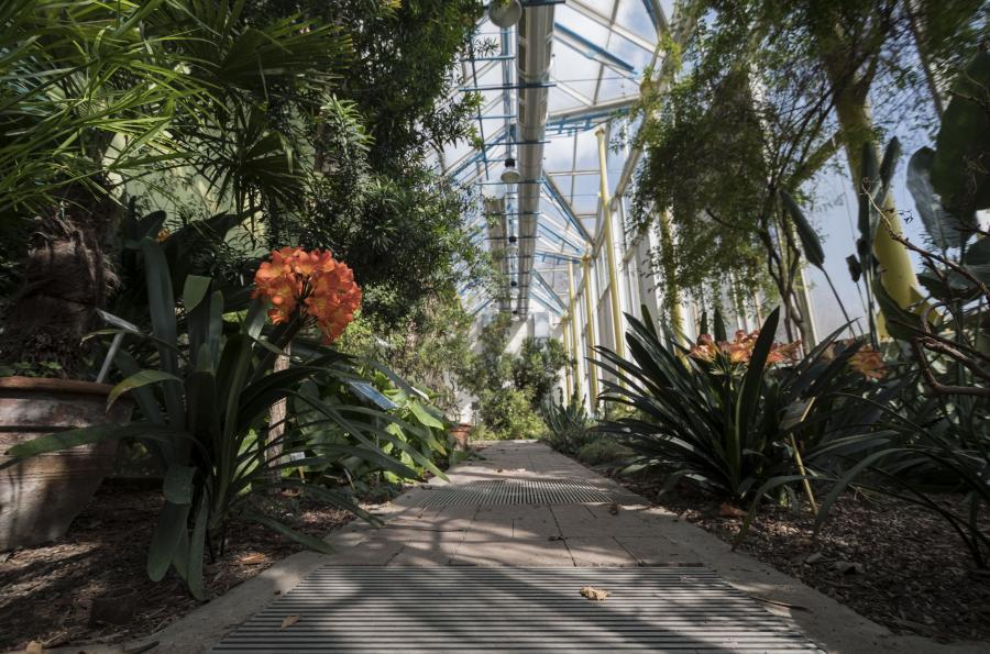 Interno della Serra del Sudafrica, Orto Botanico di Torino (foto L.M. Mingozzi)