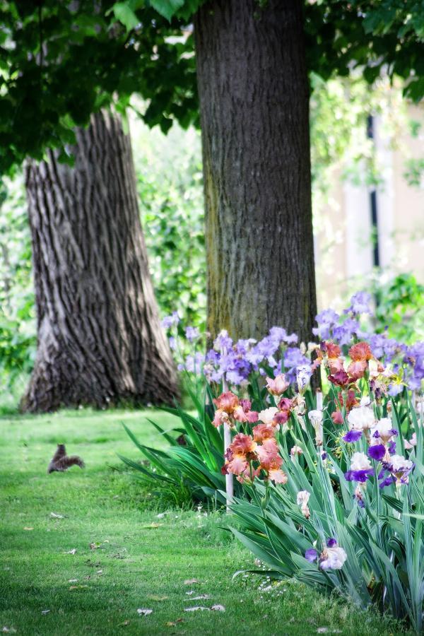 Iris e scoiattolo, Orto Botanico di Torino (foto P. Piga)