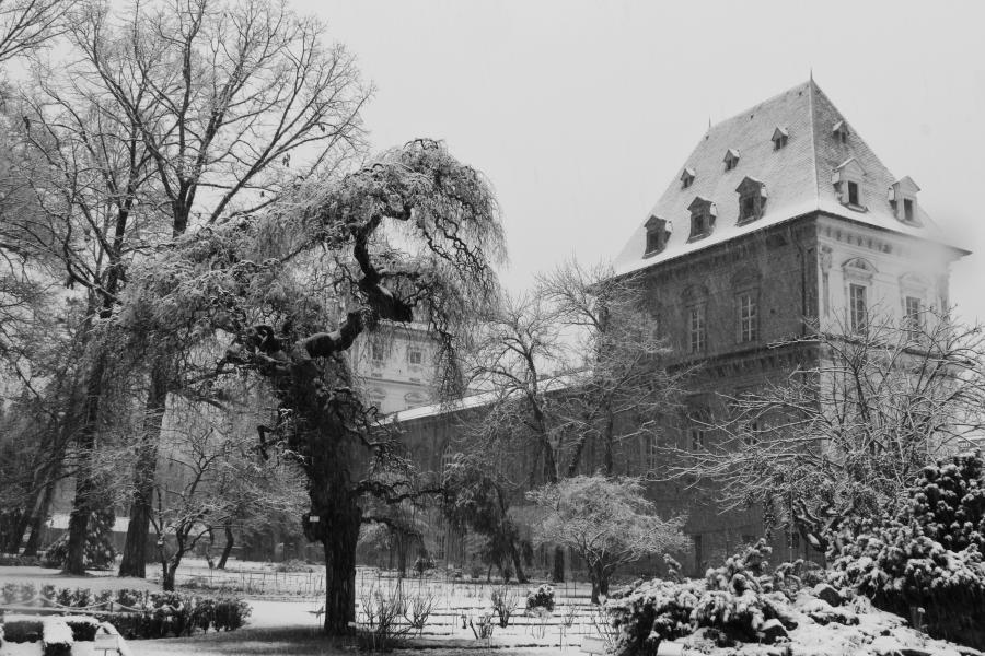 """""""L'orto sotto la neve"""", Orto Botanico di Torino (foto F. Cataldi)"""