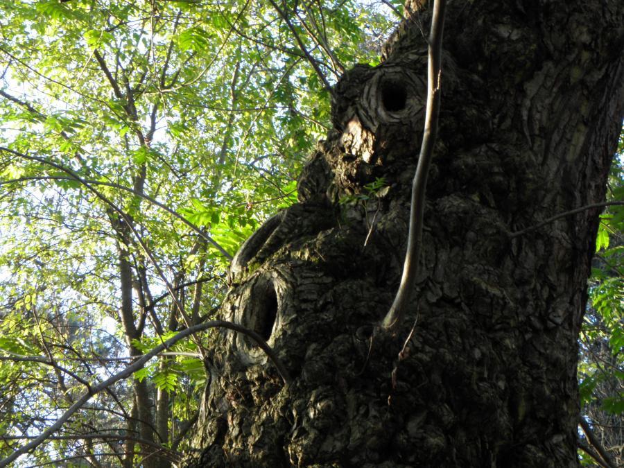 Vecchio tronco, Boschetto dell'Orto Botanico di Torino (foto G. Teppa)