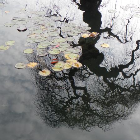 """L'acqua, """"albero che si specchia"""", Orto Botanico di Torino (foto M. Poggi)"""