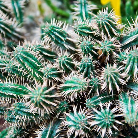 ..._ nella serra delle piante succulente dell'Orto Botanico di Torino (foto P. Cirella)