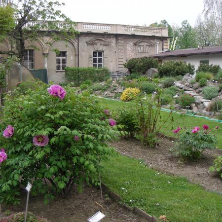 La collezione di Peonie, Orto Botanico di Torino (foto V. Fossa)