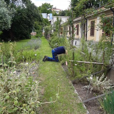 Il diserbo dei cassoni delle piante officinali (foto L.M. Mingozzi)