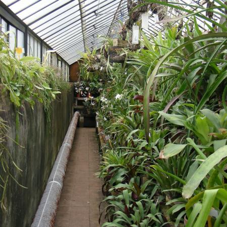 L'interno della serra tropicale dell'Orto Botanico di Torino (foto V. Fossa)