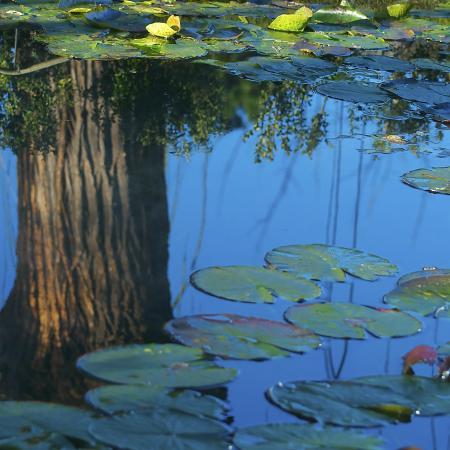 """L'acqua, """"L'albero sospeso"""", Orto Botanico di Torino (foto M. Guizzardi)"""
