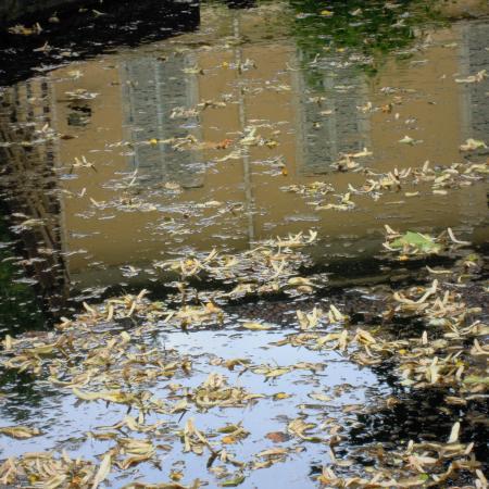 """L'acqua, """"Monet all'Orto Botanico"""", Orto Botanico di Torino (foto L. Cerrato)"""