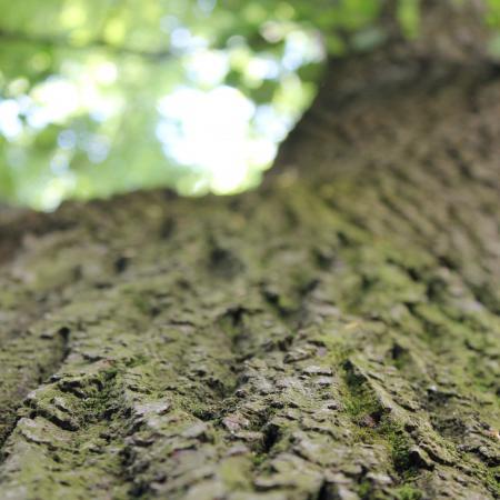 """""""Pelle d'albero"""", Orto Botanico di Torino (foto Scuola I. Nievo)"""