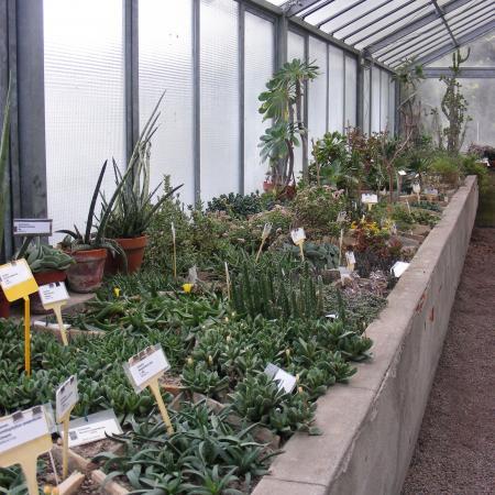 L'interno della serra delle piante succulente dell'Orto Botanico di Torino (foto V. Fossa)