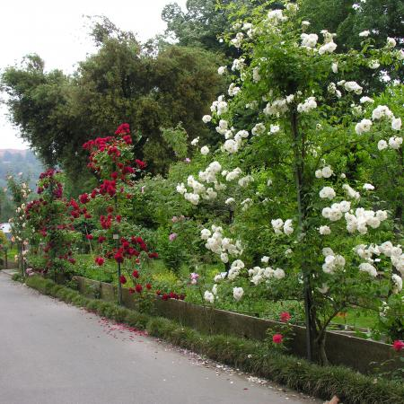 Viale delle Rose, Orto Botanico di Torino (foto V. Fossa)