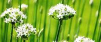 100 piante utili all'uomo (foto A. Galatini)