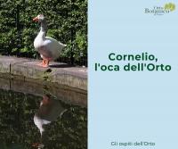 Cornelio, l'oca dell'Orto