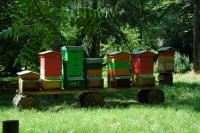 Gli apiari dell'Orto Botanico (foto L. Domenis)