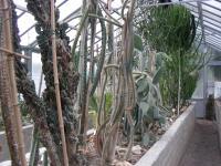 Serra delle Succulente dell'Orto Botanico di Torino (foto V. Fossa)